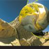 Masking Unit - Desert