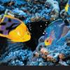Bowling Masking - Underwater
